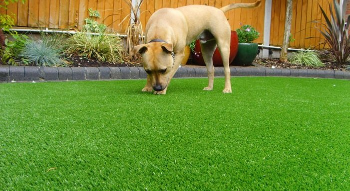 Give Your Pets Some Artificial Grass of their Own