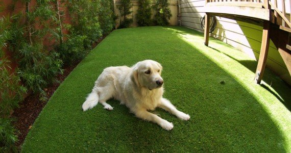 Is it a misconception that animals won't enjoy artificial grass as much as the real thing?