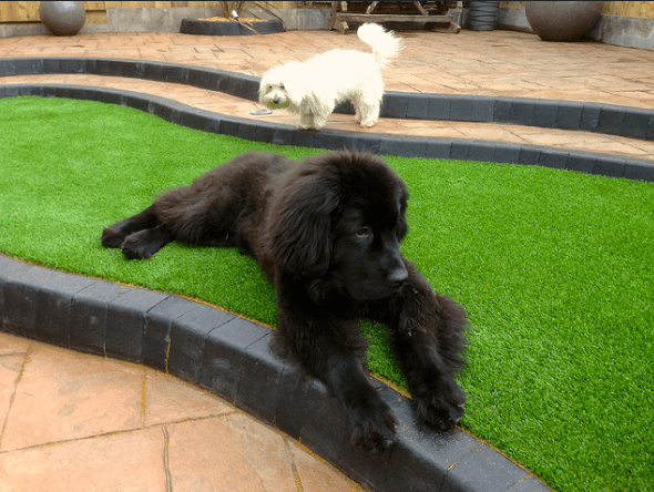 Artificial Grass and Pets: What You Need to Know